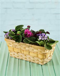 gifts: African Violets in a Basket!