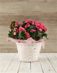 flowers: Begonia Basket!