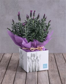 flowers: Lovely Lavender Box!