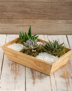 plants: Spring Succulent Tray!