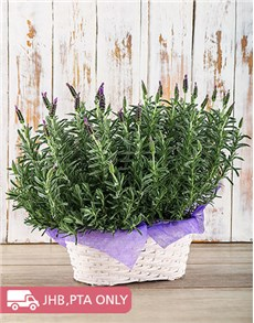 flowers: Double Lavender Beauty!