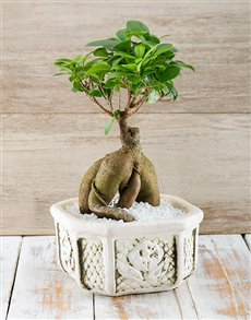 plants: Flipping Fantastic Ficus!