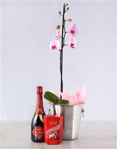 plants: Magical Orchid Gift!