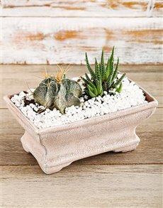 plants: Ultimate Zen Arrangement!