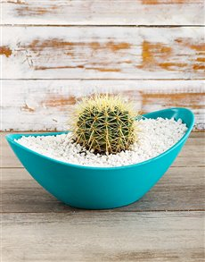plants: The Calming Cacti!