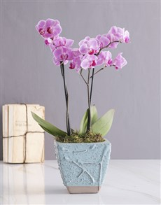 plants: Orchid in Blue!