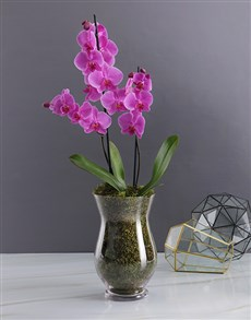 gifts: Orchid Glass Vase!