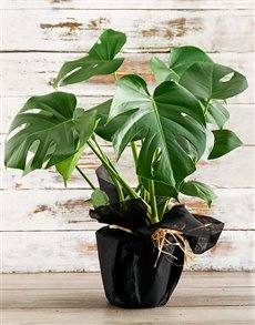 plants: Green Monster Arrangement!