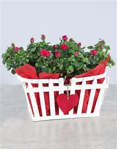 plants: Box of Love Rose Box!