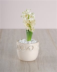 flowers: White Hyacinth in a Cream Ceramic!