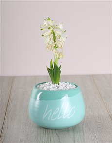flowers: White Hyacinth in a Hello Pot!