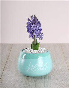 flowers: Hyacinths in Turquoise Hello Pot!