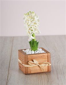 flowers: White Hyacinth in a Wooden Crate!