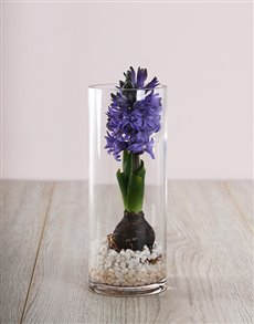 flowers: Purple Hyacinth Vase!