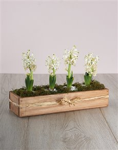 flowers: Hyacinths in a Wooden Crate!