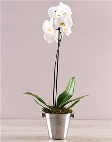 plants: Single Orchid Delight!