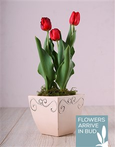 flowers: Red Tulips in Ceramic Pot!