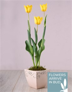 flowers: Yellow Tulips in Ceramic Pot!