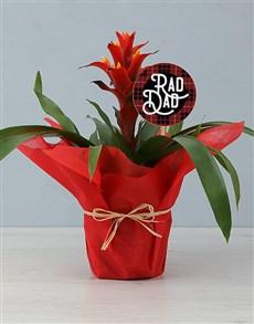 flowers: Rad Dad Guzmania!