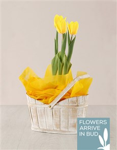 flowers: Yellow Tulip Plant in White Wash Basket!