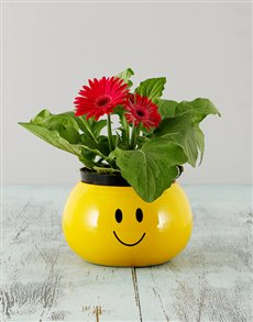 flowers: Mini Gerbera in a Smiley Pot!