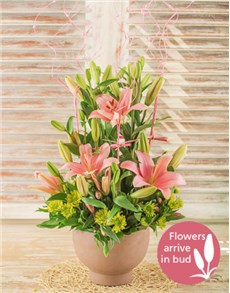 flowers: Enclosure!