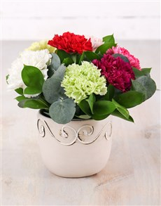 flowers: Potted Carnation Mix!
