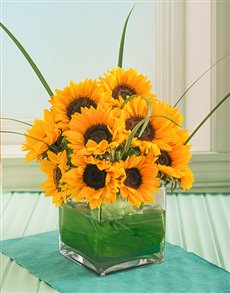 flowers: Sensational Sunflowers in a Square Glass Vase!