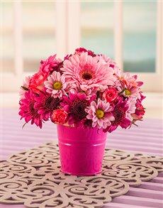 flowers: Mixed Pink Daisy Bucket!