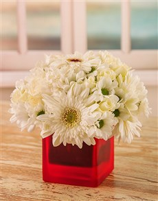flowers: White Daisies in Red Vase!
