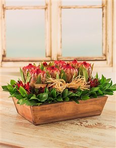 flowers: Red Proteas and Leafy Arrangement in Tray!