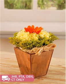 flowers: Orange Daisy and Cream Flowers!