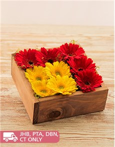 flowers: Gerberas in a Wooden Box!
