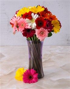 flowers: Mixed Gerberas in a Purple vase!