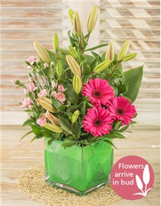 flowers: Tropical Pink!