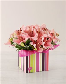 flowers: Pink Asiflorum Lilies in a Striped Box!