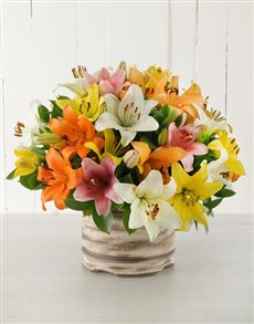 flowers: Mixed Asiflorum Lily Pot!