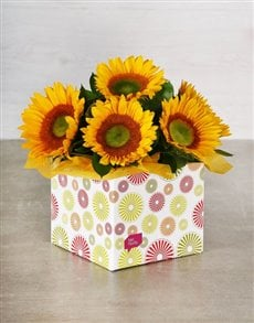 flowers: Green Button Sunflowers in Occasion Box!