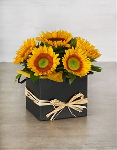 flowers: Green Button Sunflowers in Black Box!