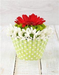 flowers: Red and White Gerbera & Spray Cupcake!