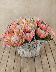flowers: Protea Power Basket!