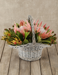 flowers: King Protea & Greens Basket!