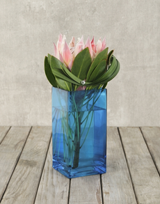 flowers: King Protea in Blue Square Vase!