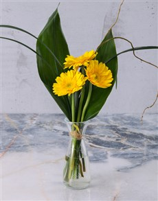 flowers: Stepped Yellow Gerberas!
