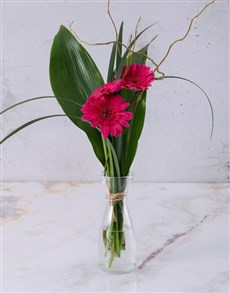 flowers: Stepped Pink Gerberas!