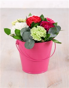 flowers: Mixed Carnation Bliss Bucket!