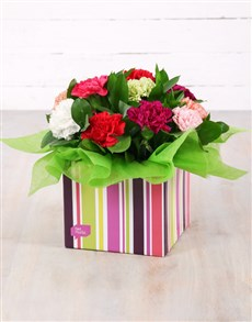 flowers: Mixed Carnations in Striped Box!