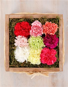 flowers: Mixed Carnations in Wooden Crate!