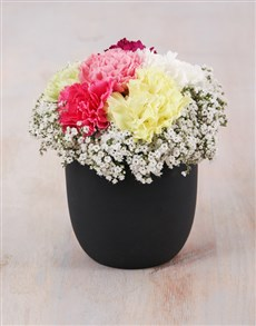 flowers: Mixed Carnations in Ceramic Black Pot!