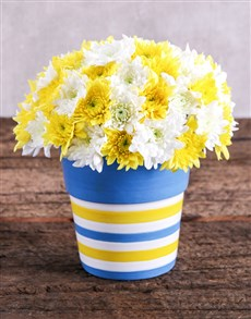 flowers: Sprays in Blue and Yellow Pottery!